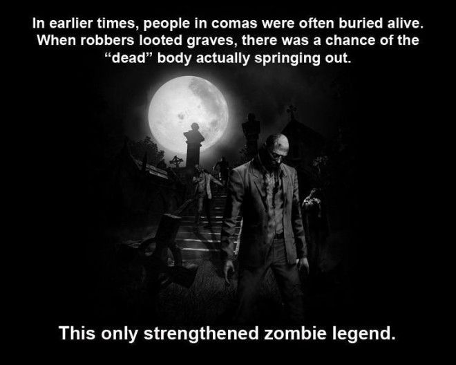 scientific facts of zombies Prepare for the zombie apocalypse by learning these interesting facts about the living dead, including little-known zombie history, trivia, and much more.