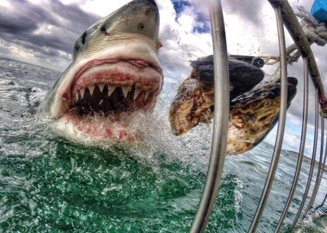 The Best GoPro Photos Ever Taken Will Make Your Jaw Drop - 33 incredible photos taken gopro