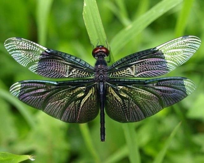 20 Unexplored Facts From The Kaleidoscopic Dragonfly World