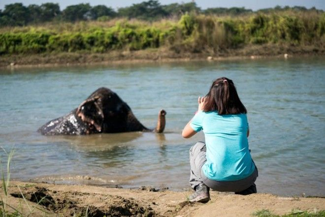 Observe the wildlife in Chitwan National Park Nepal