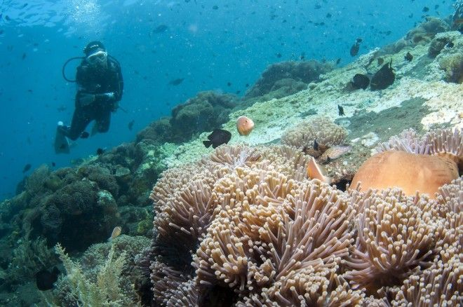 Scuba dive in quiet northern Bali