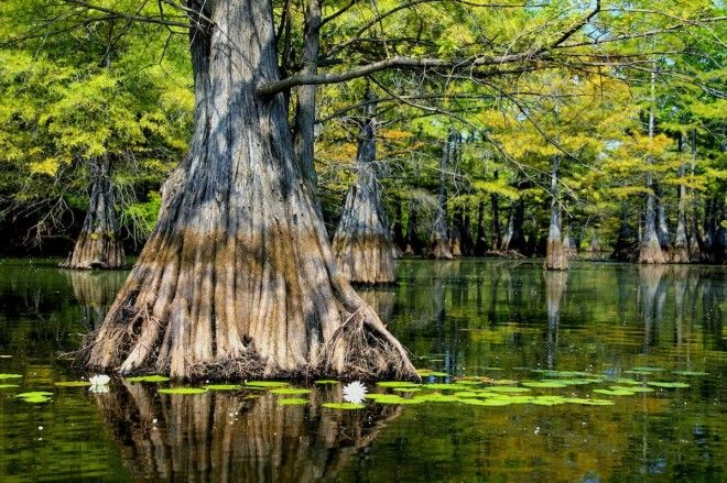 Take a road trip around Louisiana USA