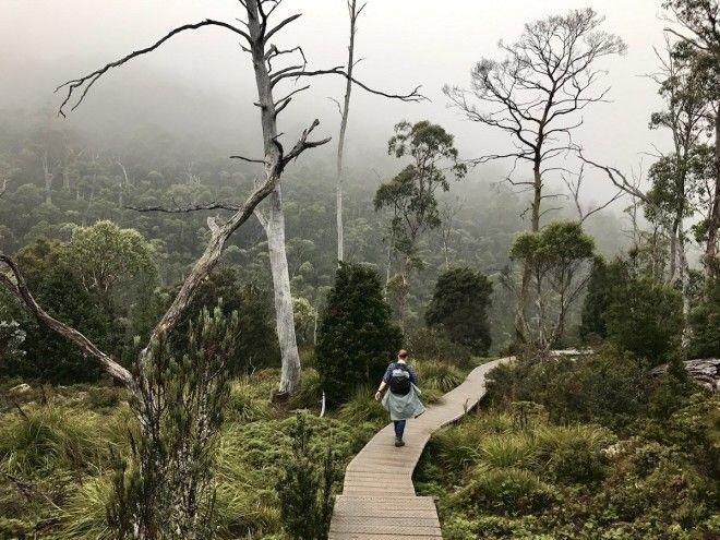 Watch out for wombats in Cradle Mountain Tazmania