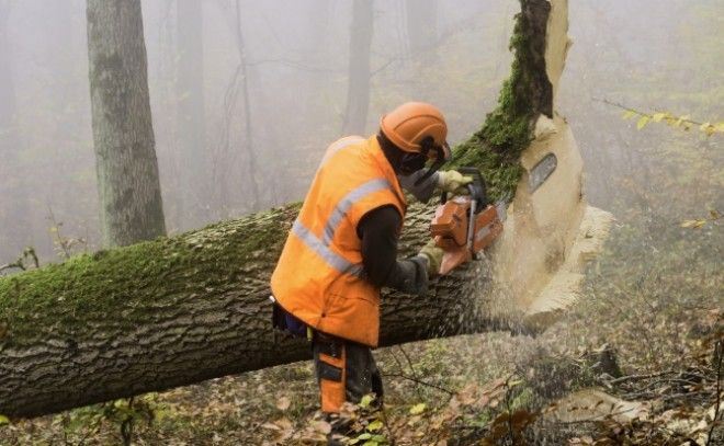The 11 Most Dangerous Jobs Around the World
