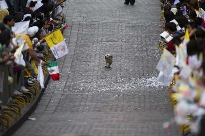 1 This dog who thinks this parade is all for him