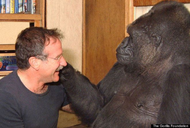 Koko-the-gorilla-and-Robin-Williams
