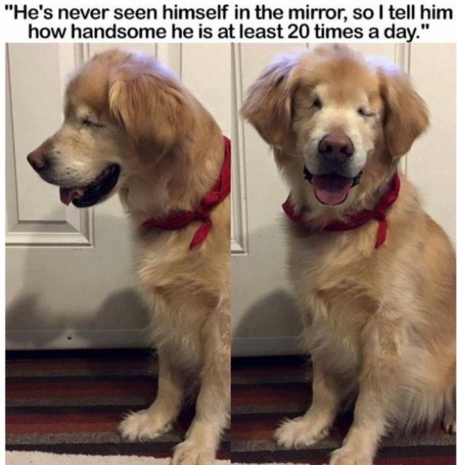 25 Animals Who Turned Out to Be Hilarious Meme Material