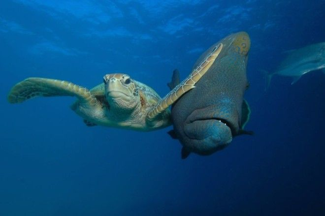Winner Of The Padi Under The Sea Category Slap By Troy Mayne