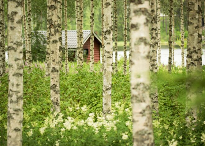 Finland Is 100YearsOld Today So Here Are 100 Reasons To Visit