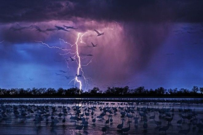 Sand Hill Cranes By Randy Olson Siena International Photo Awards Photo Of The Year