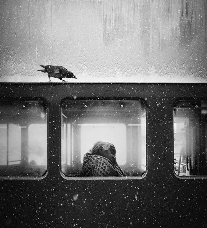 Crow Of Lviv By Jack Savage 1st In General Monochrome Category