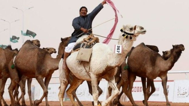 man with competing camels