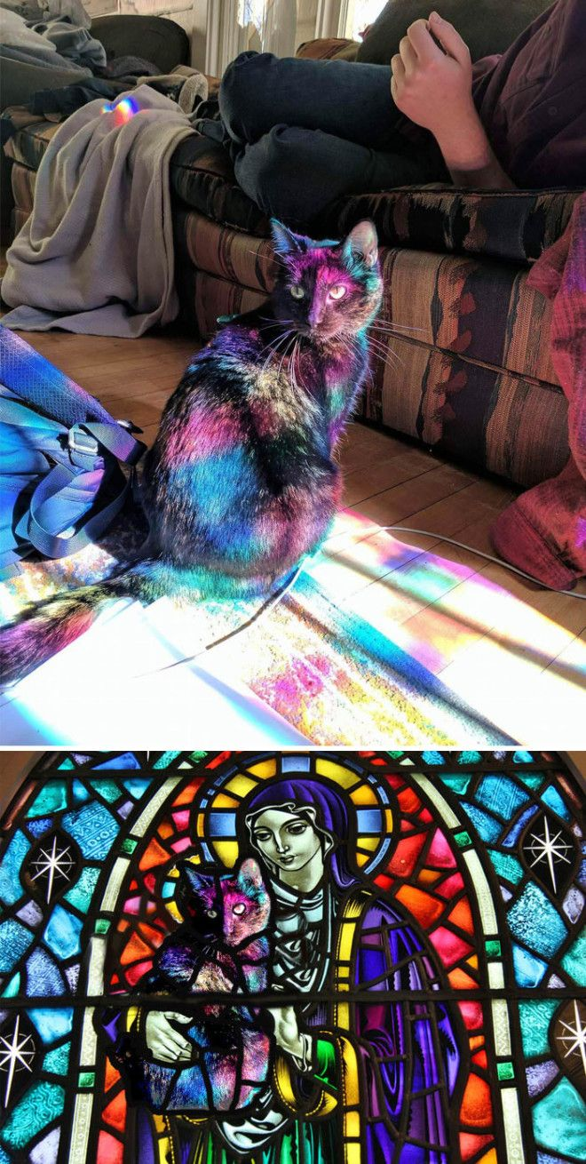 This Cat Bathed In Light From A Stained Glass Window