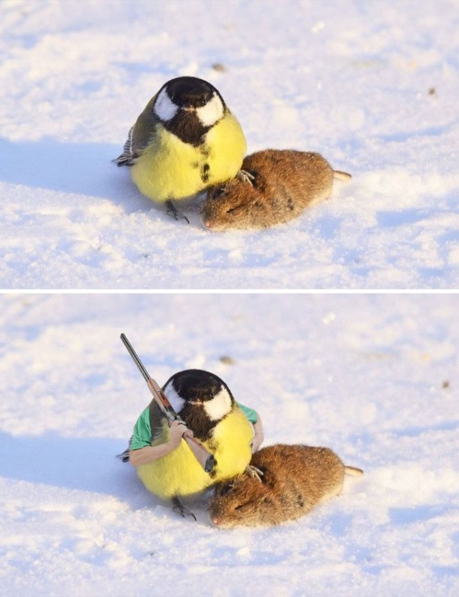 A Tit And Showing Off It's Prey