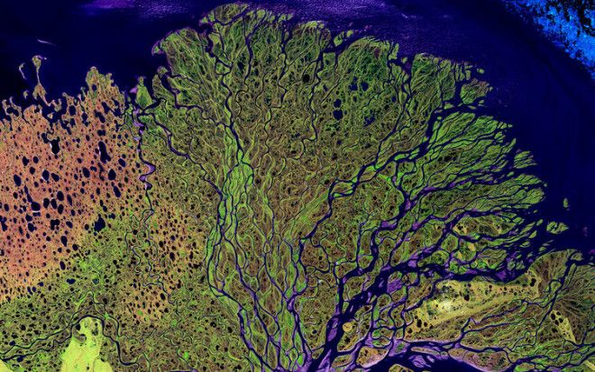 This is the Lena River in Russia, one of the largest river systems in the world. It's also an important breeding ground for many Siberian species.