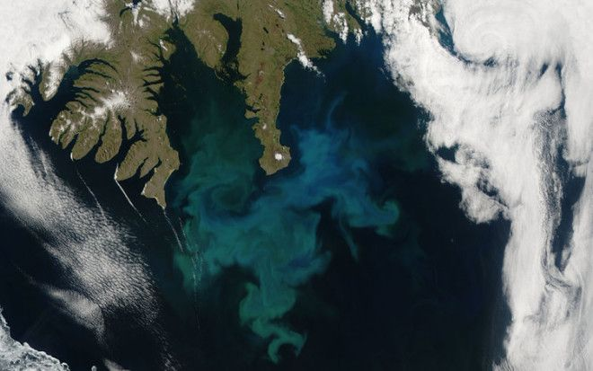 This phytoplankton bloom was captured off the coast of Iceland by NASA's Aqua satellite in 2010.