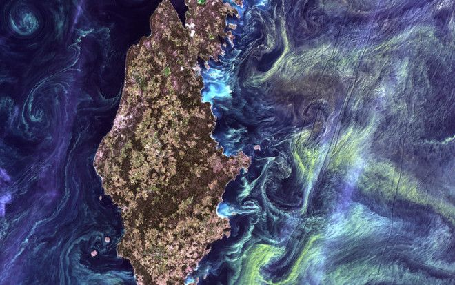 Like a Van Gogh painting, massive congregations of greenish phytoplankton swirl in the dark water around Gotland, a Swedish island in the Baltic Sea.