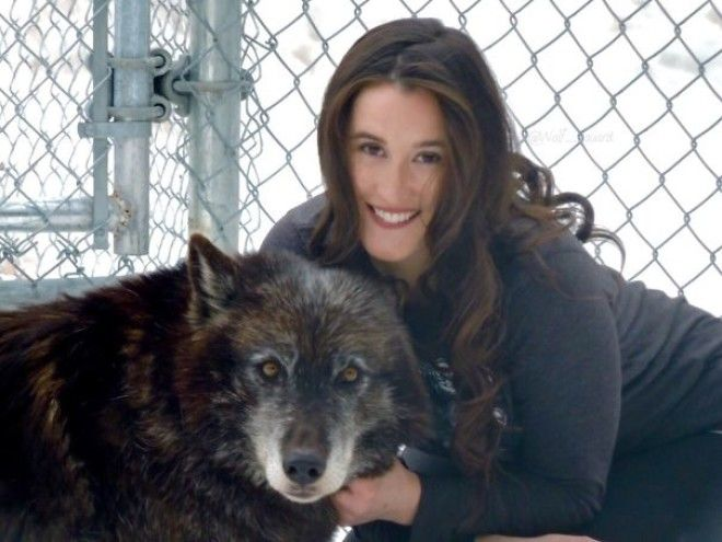 7 Years Ago I Was Raped & Diagnosed With PTSD. 6 Years Ago I Started Working With Wolves As A Form Of Therapy. Today I Run A Wolf Sanctuary And Have Healed More Than I Ever Imagined Possible