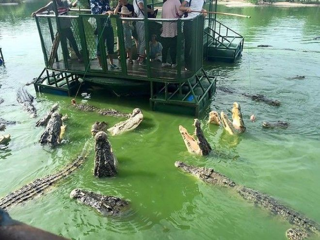 chinese-tourist-raft-feeding-meat-middle-of-hungry-crocodiles-1