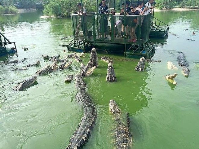 chinese-tourist-raft-feeding-meat-middle-of-hungry-crocodiles-2
