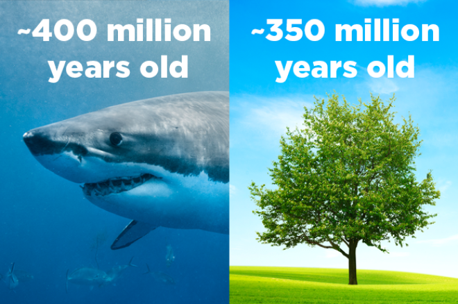 For about 50 million years the world had sharks and no trees