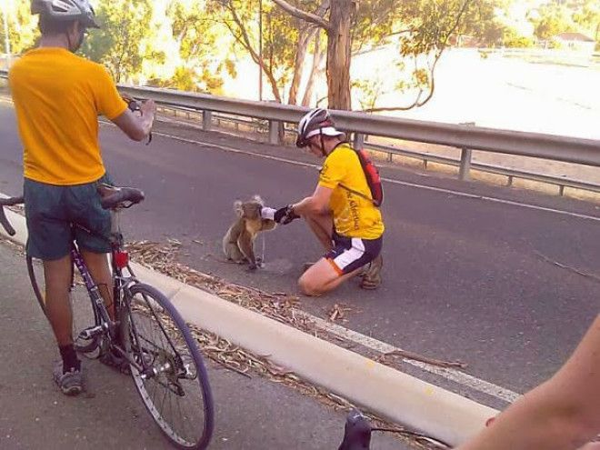 When this cyclist sacrificed his track time to give a Koala bear something to drink