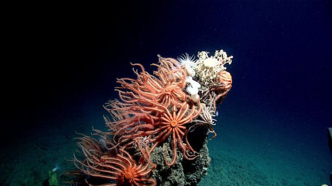 A craggy outcrop on the seafloor supports a dense community of sea stars.