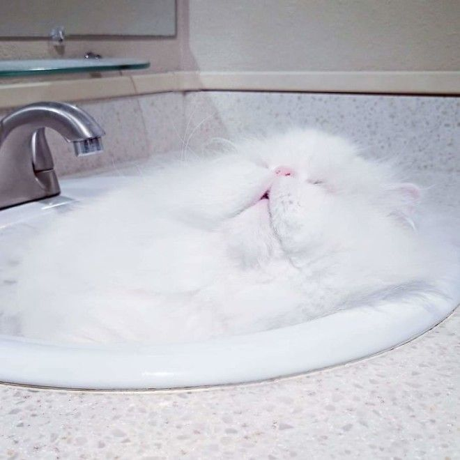 My Sink Is Clogged