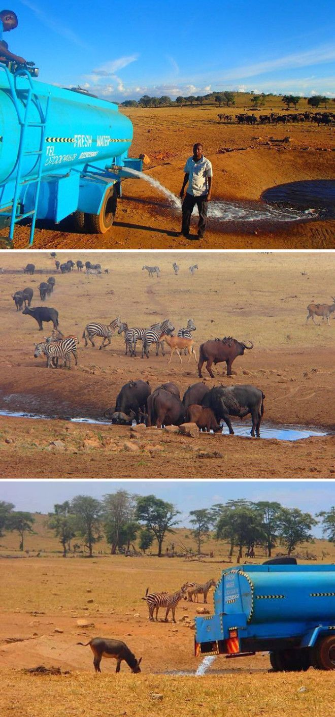 Every Day This Man Drives Hours In Drought To Provide Water To Thirsty Wild Animals In Kenya
