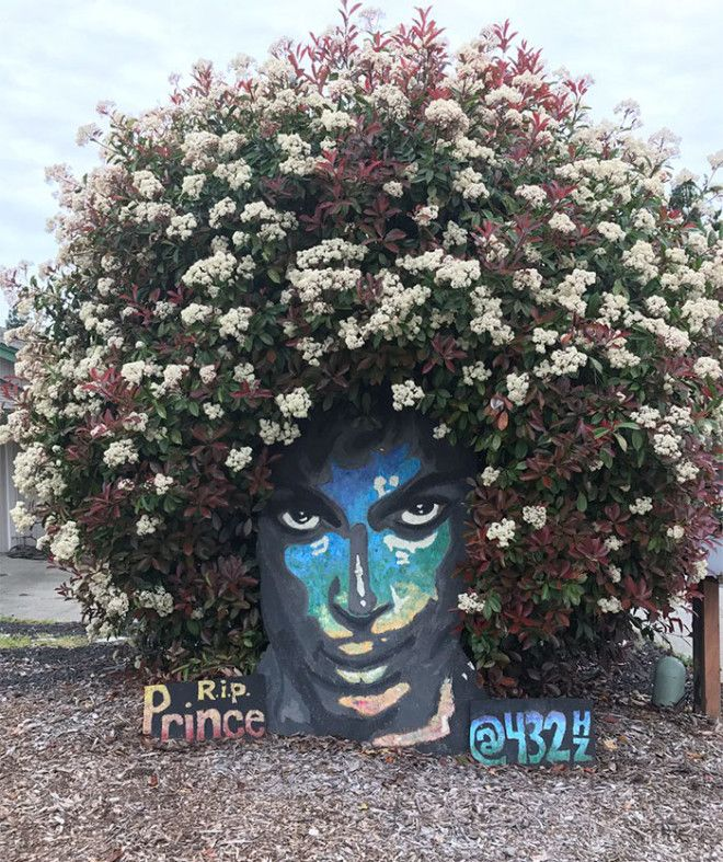 prince-tribute-bush-bloom-christine-stein-sacramento-california-13
