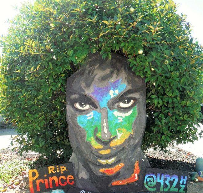 prince-tribute-bush-bloom-christine-stein-sacramento-california-9