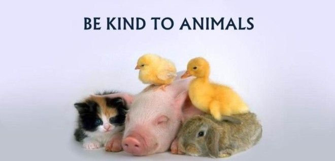 Showing kindness to an animal makes you a better person