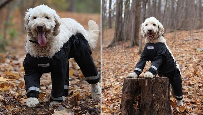 Pants for your pup