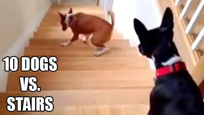 Some hilarious clips of dogs