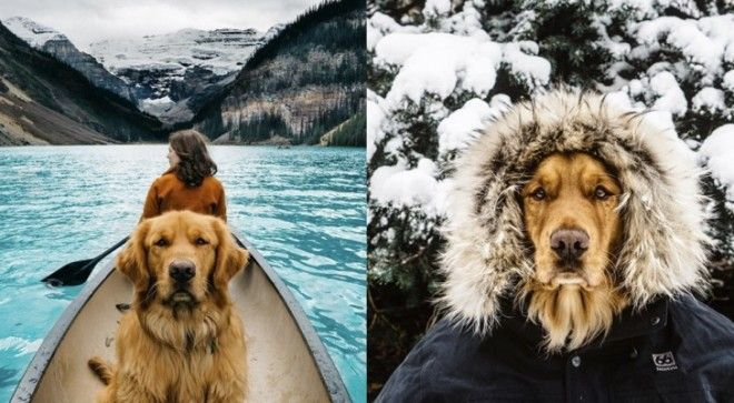 Dogs are the best travel buddy