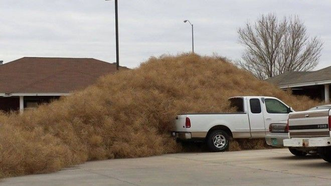 Invaded by tumbleweed