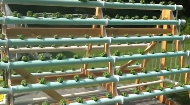 DIY A-Frame Vertical Hydroponic Garden System