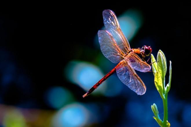 The most beautiful, admired insects