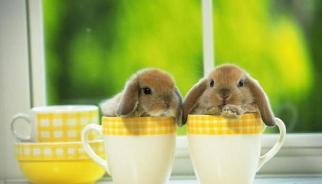 Look at these bunnies