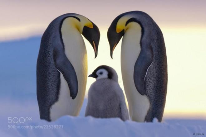 Penguins are such amazing