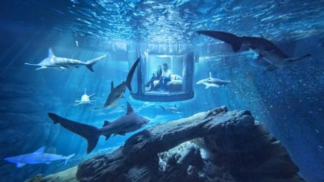A night submerged in a shark tank