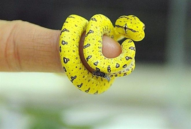 I seriously did not expect snakes to be this cute.