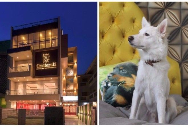 Welcome to India's firsthotel for dogs