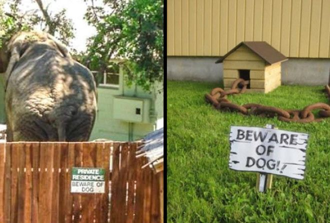 BEWARE OF DOG ;-)