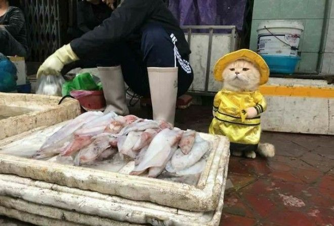 Would you buy a fish from this seller? ;-)