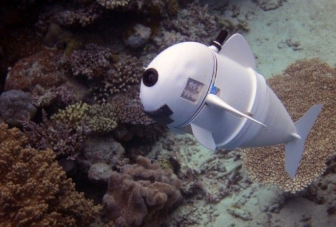 MIT engineers developed a first-of-its-kind soft bodied robot that can swim completely untethered like a real fish.
